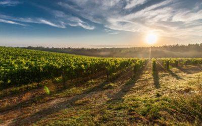 Skvělá moravská vína